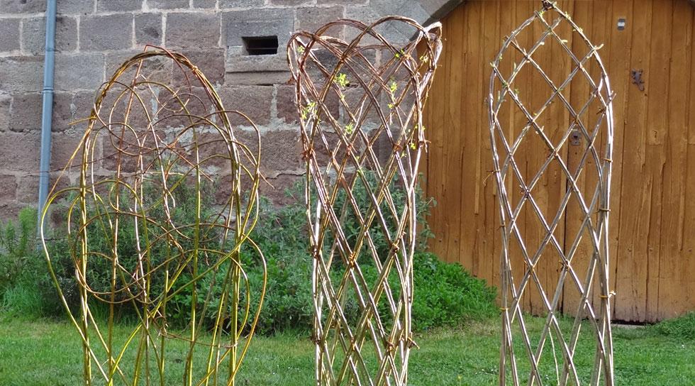haie d'osier en jardinière avec des feuilles dès le printemps